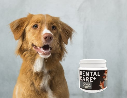 Pure for pets - Dental Care Plus
